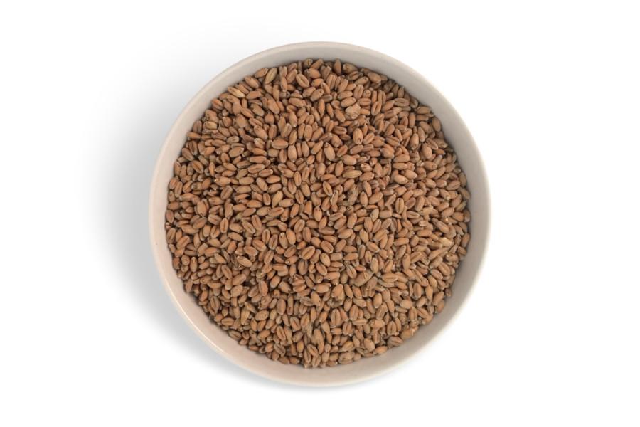 Pšeničný slad světlý (Záhlinice)  obrázek